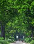 """myszok """"..."""" (2010-10-18 20:22:25) komentarzy: 1, ostatni: Ale tu tlenu w zdjeciu, przyjemne, choc ciut za zielono dla mnie :)"""