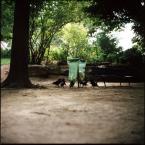 """monikita """"."""" (2010-10-22 12:27:56) komentarzy: 6, ostatni: od razu widać, że to francuskie ptaki ;-)"""