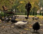 """Blaszko """"Przez park"""" (2010-10-23 19:22:01) komentarzy: 1, ostatni: ++/"""