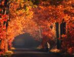 """pawello91 """"Jesień..."""" (2010-10-26 18:19:19) komentarzy: 24, ostatni: swietne"""