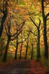 """Tadek Piotrowski """"Jesienne klimaty"""" (2010-10-26 19:34:33) komentarzy: 9, ostatni: ładny jesienny kadr"""