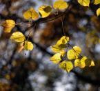 """Adam Pol """"Jesień przyszła wczoraj:)"""" (2010-10-29 20:44:48) komentarzy: 13, ostatni: ładne barwy"""