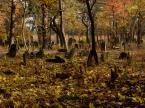 """Choszczman """"jesiennie.."""" (2010-10-30 17:46:32) komentarzy: 22, ostatni: bdb"""