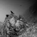 """marek2112 """"strażnicy Skrlaticy"""" (2010-10-30 21:07:43) komentarzy: 24, ostatni: każdy ptak musiał coś dostać, i wtedy zwalniał miejsce następnemu... :)"""