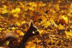 """camomile_girl """"Poszukiwacz złota"""" (2010-11-02 07:05:43) komentarzy: 1, ostatni: oj poszukiwacz poszukiwacz"""