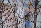 """tryksa """"przed zimą"""" (2010-11-02 11:48:33) komentarzy: 1, ostatni: przed zimą jest jesień i ptaszek na uwięzi :)"""