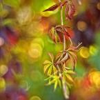 """Patulkaa """"magiczna jesień"""" (2010-11-03 17:50:50) komentarzy: 23, ostatni: wibrujące +++"""
