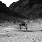 """Kajman84 """""""" (2010-11-09 14:50:51) komentarzy: 3, ostatni: coś wychudzone to zwierze"""