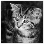 """TYGRYSSSIATKO """"Kot Psot"""" (2010-11-17 16:45:42) komentarzy: 17, ostatni: Pozdrowienia od Milusia zwanego również Panem Pupkiem!"""