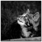 """TYGRYSSSIATKO """"Kot Psot II"""" (2010-11-17 17:01:04) komentarzy: 8, ostatni: Pozdrowienia od Milusia!"""