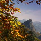 """terro """"Jesiennie"""" (2010-11-17 18:11:43) komentarzy: 27, ostatni: :)..."""