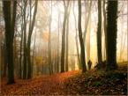 """Wołodytjowski """"Przedzimie w czerwieni i złocie"""" (2010-11-18 11:22:57) komentarzy: 9, ostatni: Pięknie."""