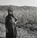 """Slawekol """"Pogodna  jesień"""" (2010-11-22 23:05:47) komentarzy: 17, ostatni: rasowy portret.."""