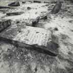 """Liść Schabowy """""""" (2010-11-25 12:05:23) komentarzy: 6, ostatni: Amen! Nie ruszać. Swoją drogą, wybierz się kiedy, Liściu niezdecydowany, do Środy Wielkopolskiej, a zobaczysz, jak ładnie na Żydkach marchew rośnie."""