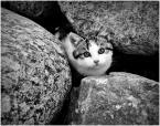 """Arek Kikulski """""""" (2010-11-27 20:11:30) komentarzy: 13, ostatni: @Conan the Destroyer [2010-11-27 20:18:13] ty naprawdę widzisz tam tylko kota ?? nie dostrzegasz kontrastów ??  miękkie   twarde ?? Wielkie  małe ?? pewni gdyby był sam kot też napisał bym jedynie """"śliczny kotek:)"""" i wszystko ale to..."""