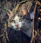 "Arek Kikulski """" (2010-11-27 20:24:03) komentarzy: 4, ostatni: śliczny kotek :)"