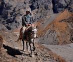 """wizental """""""" (2010-12-04 12:13:16) komentarzy: 1, ostatni: Koń w Himalajach to chyba dość rzadki widok?"""