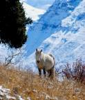 """wizental """""""" (2010-12-04 12:17:06) komentarzy: 2, ostatni: bardzo ladne zdjecie, tylko szkoda, ze kon nie popatrzyl w prawo."""