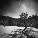 """Marcin95 """"Zaczarowane drzewo..."""" (2010-12-04 17:52:48) komentarzy: 5, ostatni: Kapitalnie"""