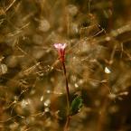 """byebasket """"jak to jesień wygrywała"""" (2010-12-08 18:32:48) komentarzy: 9, ostatni: niby jesień a ze świętami sie kojarzy :) ładna błyskotka"""