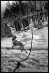 """kiloff jeden """"winter beasts"""" (2010-12-08 20:14:03) komentarzy: 2, ostatni: z golymi cyckami na cmentarzu? no wiesz? wstydzilabys sie:)"""
