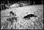 """kiloff jeden """"winter beasts 2"""" (2010-12-08 20:15:21) komentarzy: 7, ostatni: no Koudelke pamietam..."""