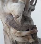 """Miras40 """"przytulacz kamieni"""" (2010-12-09 20:15:15) komentarzy: 5, ostatni: jak widac w przyrodzie wiele jest mozliwe... ;) fajnie wypatrzone :)"""