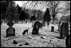 """kiloff jeden """"winter beasts 5"""" (2010-12-13 02:38:33) komentarzy: 4, ostatni: co wiedziales?"""