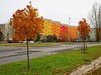 """Jacek 55 """"barwy jesieni"""" (2010-12-13 17:49:41) komentarzy: 6, ostatni: Mnie się podoba, no to ładne :)"""