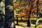 """ulka kalinowska """"......"""" (2010-12-13 21:39:26) komentarzy: 3, ostatni: ...aż cieplej się zrobiło, ładne kolory"""