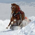 """Ronceval """""""" (2010-12-18 12:16:03) komentarzy: 24, ostatni: to zdjęcie zawsze było dla mnie inspiracją. pozdrawiam :)"""