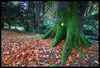 """Mnieteq """"*"""" (2010-12-30 10:30:01) komentarzy: 6, ostatni: pomarańczowy i zielony to kolory Irlandii ;)"""