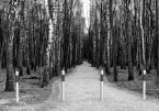 """Jacek 55 """"Drzwi do lasu"""" (2011-01-05 17:03:55) komentarzy: 7, ostatni: Czasem i brzozy pomyślą, i się wzorkiem dostosują! :-))"""