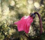 """Maxmaks """"bo światło to magia...."""" (2011-01-10 21:00:27) komentarzy: 66, ostatni: swietne"""