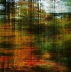 "BALTORO ""śnił się lasom las..."" (2011-01-13 18:35:56) komentarzy: 3, ostatni: +++"