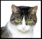 """zbyniu """"Starczy juz tych błysków:)"""" (2011-01-17 22:30:24) komentarzy: 5, ostatni: a mnie się podoba seria z kocią modelką =^..^="""