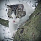 """Arek Kikulski """"przyczajony tygrys..."""" (2011-01-25 13:49:28) komentarzy: 2, ostatni: =^..^="""