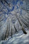 """scots """"drzewka zimowe..."""" (2011-02-04 19:44:12) komentarzy: 37, ostatni: ;o"""