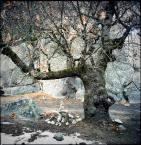 """epigon """"***"""" (2011-02-10 22:25:03) komentarzy: 6, ostatni: piękny drzewiec, fajne DNO - gratuluje :)"""