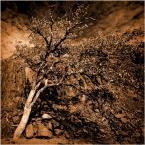 """aston martin """""""" (2011-02-16 20:54:57) komentarzy: 16, ostatni: Czekoladowe drzewo-to tutaj krasnoludki podrzucają słodycze,nie tylko dla dzieci...;)"""