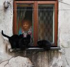 """asiasido """"Na Dzień Kota :)"""" (2011-02-17 19:26:54) komentarzy: 51, ostatni: Przydałby się jej jakiś mlodszy kochanek, koty to neurotyczne rozwiązanie na samotność"""