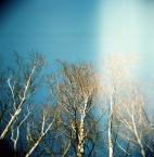 """hunting_bears """""""" (2011-03-02 18:02:50) komentarzy: 1, ostatni: to też sie mnie podoba:) piękne"""
