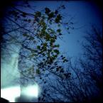 "lanolina ""* * *"" (2011-03-05 17:45:57) komentarzy: 3, ostatni: :)"
