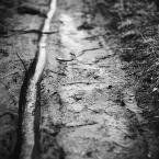 """justyna-sin """"wąż wklęsły"""" (2011-03-12 11:24:45) komentarzy: 2, ostatni: To jest super"""