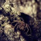 """BigBadWolf """"piknik pod wiszącą skałą"""" (2011-03-14 10:01:33) komentarzy: 6, ostatni: niezły jaskiniowiec, tytuł przywołuje świetny film w pamięci"""