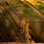 """lukier """"złota jesień"""" (2011-03-14 22:14:49) komentarzy: 6, ostatni: ach to Roztocze..:)"""