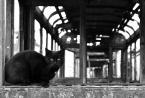 """myszok """"..."""" (2011-03-20 20:01:14) komentarzy: 10, ostatni: Maćku to nie jest ten kot ;]... on mieszka we Wrocławiu w 'umieralni tramwajów' na Legnickiej - pz"""