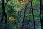 """mysliciel """"The Rolling Waves of Forest Haze"""" (2011-03-28 23:04:47) komentarzy: 0, ostatni:"""