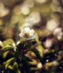 """Maxmaks """"wiosna!!!"""" (2011-04-04 20:09:09) komentarzy: 20, ostatni: Pięknie to wygląda! :)"""