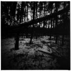 """choraw """"las wieczorową porą"""" (2011-04-06 20:38:15) komentarzy: 1, ostatni: dobrze..."""